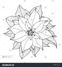 poinsettia isolated christmas flower vintage vector stock vector