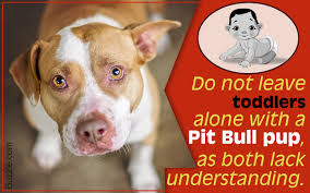 american pit bull terrier life expectancy what you must know before getting a pit bull terrier mix as a pet