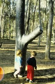 terry allen trees