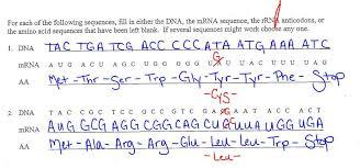 translation worksheet answers ec honors biology wrap up