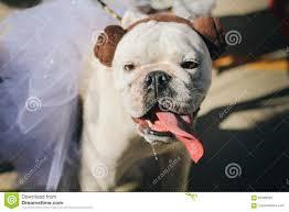 dog dressed up as princess leia costume editorial image image