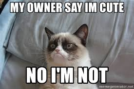 Cute No Meme - my owner say im cute no i m not grumpy cat meme generator