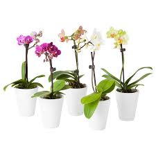 ikea papaja ceramic 5 u0027 diameter 7 u0027 planter pot set 2