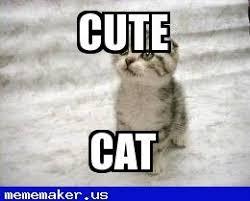 Cat Meme Maker - 77 best sad cat meme creator images on pinterest sad cat meme