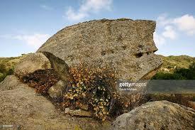 Flowers Irvine California - park in irvine deemed california u0027s first natural landmark photos