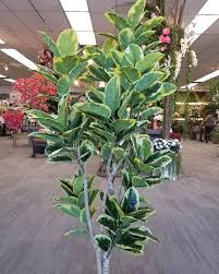 realistic custom silk trees los angeles showroom aldik home