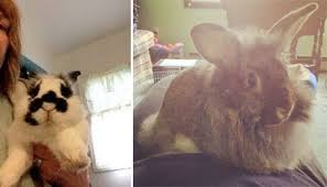 house rabbits pet rabbit care cute bunny pictures