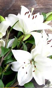 best 20 white lily flower ideas on pinterest lilies white