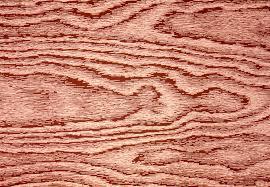wood grain pics4learning
