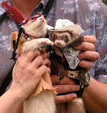 Ferret Costumes Halloween Cowboys Indians U0027t Smile Ferret