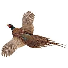 Pheasant Home Decor by High Flyer Pheasant 5087 Taxidermy At Sportsman U0027s Guide
