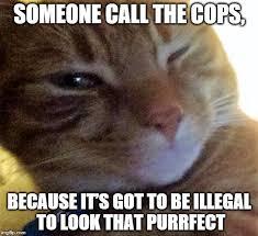 Flirtatious Memes - flirtatious cat memes imgflip