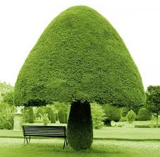 12 photos of trees that you can not believe they are real