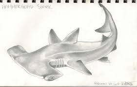 hammerhead shark drawing