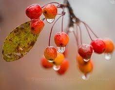 sumac fall colors cedar covered bridge madison county