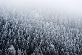 wallpaper tumblr forest fir pine forest fog top view wallpaper