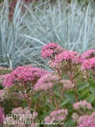 Pflanzen Fur Japanischen Garten Die 10 Schneckenfestesten Pflanzen Für Ihren Garten Plantura