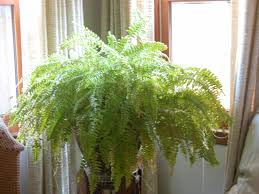 home plants decor doors t decoration house for interesting outdoor plant ideas and