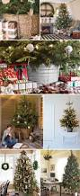 live christmas trees potted christmas lights decoration