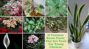 toxic plants png 8ba454