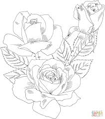 roses coloring coloring pages 7764
