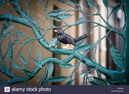 iron tree stock photos u0026 iron tree stock images alamy