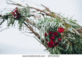 Wedding Arches Made Twigs Arched Greenery Stock Images Royalty Free Images U0026 Vectors
