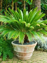 Tropical Plants Gardens Tropical Style Garden Hgtv