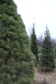25 best vermont christmas tree farms images on pinterest vermont