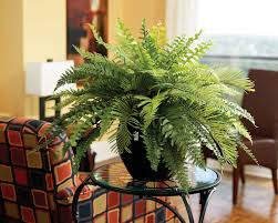 Artificial Plant Decoration Home Astonishing Ideas Fake Plants For Living Room Absolutely Smart