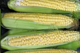 comment cuisiner le blé 10 trucs pour faire cuir le blé d inde
