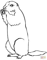 brown prairie dog coloring page free printable coloring pages