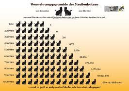 Volksbank Wien Baden Neue Kastrationskampagne Für Hunde Und Katzen