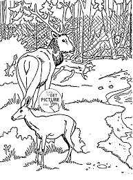 zoo deers coloring page for kids animal coloring pages printables