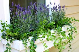 Plants For Winter Window Boxes - the best perennials to plant in window boxes ehow