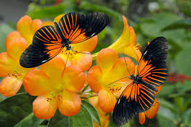 butterfly gardening learn which perennials and annuals attract
