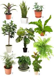 best low light house plants indoor plants low light indoor plants best position and best