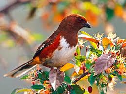hd free wallpaper of birds