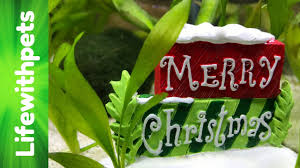 Petsmart Christmas Aquarium Decorations by Divided Betta Fish Tank Christmas Theme Youtube