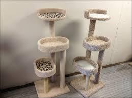 modern cat tree interiors design wonderful petsmart cat tree outdoor cat houses