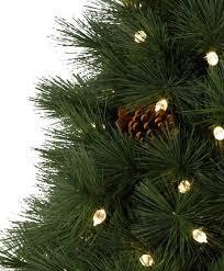 virginian pine tree tree classics