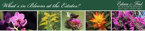 Fragrant Plants Florida - garden talk fragrant plants tropical florida gardens