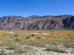 anza borrego super bloom optics4birding nature blog network