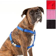Four Paws Comfort Control Harness Top Paw Signature Dog Harness Dog Harnesses Petsmart