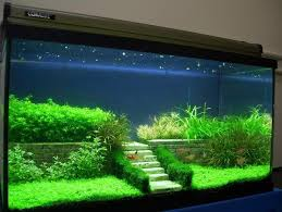 Aquascape Designs Inc 144 Best Aquascaping And Planted Tanks Images On Pinterest