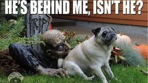 Halloween Meme - halloween memes 2015 funny photos jokes best images
