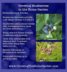 Home Garden Design Tips Garden Design Garden Design With Grow Blueberries Plants With