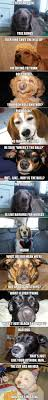 High Dog Meme - high dogs imgur