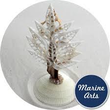 marine arts wholesale shells