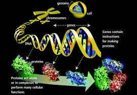genetics basics introduction to genetics